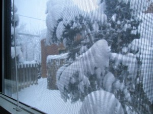 Taos's first snowstorm this week -- view from my bedroom window