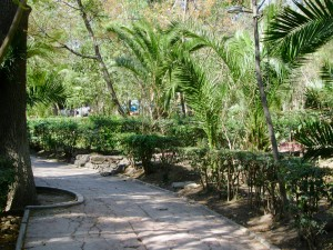 BEAUTY: on a tranquil walk in Parque Juarez